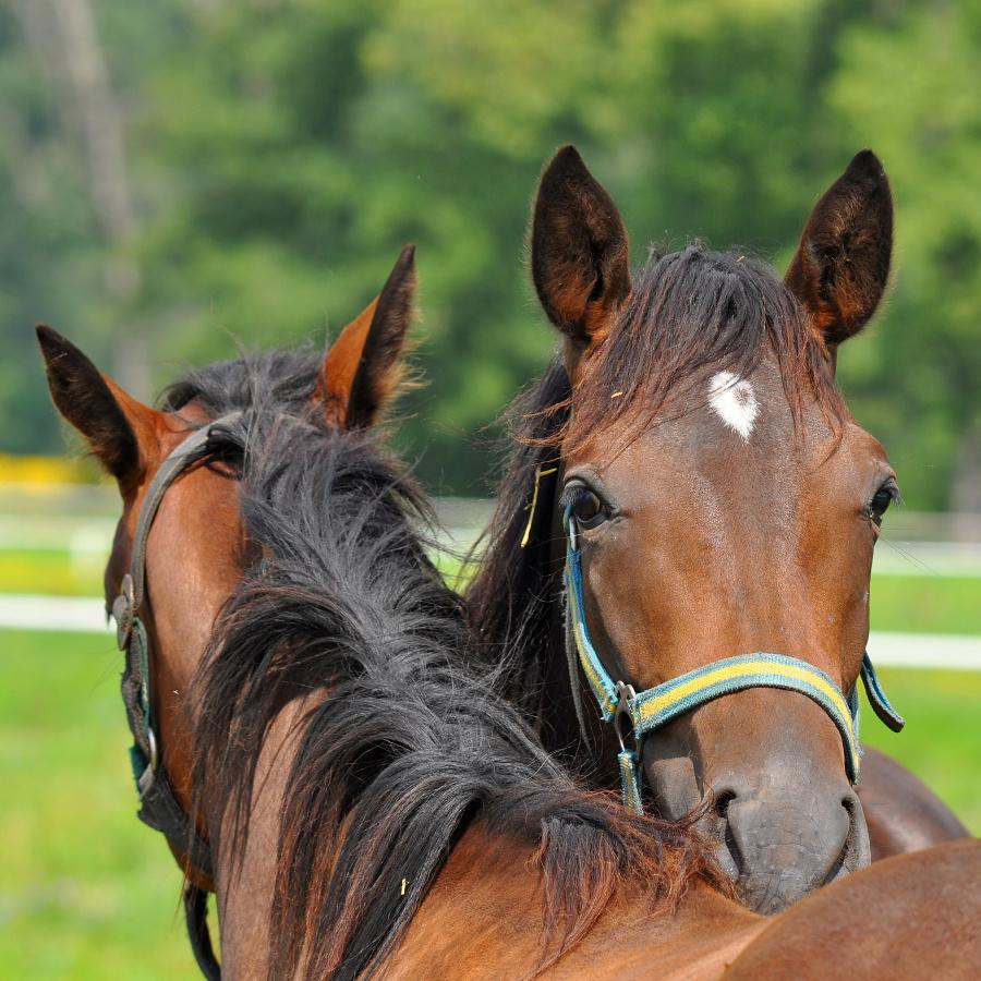 horse-talk